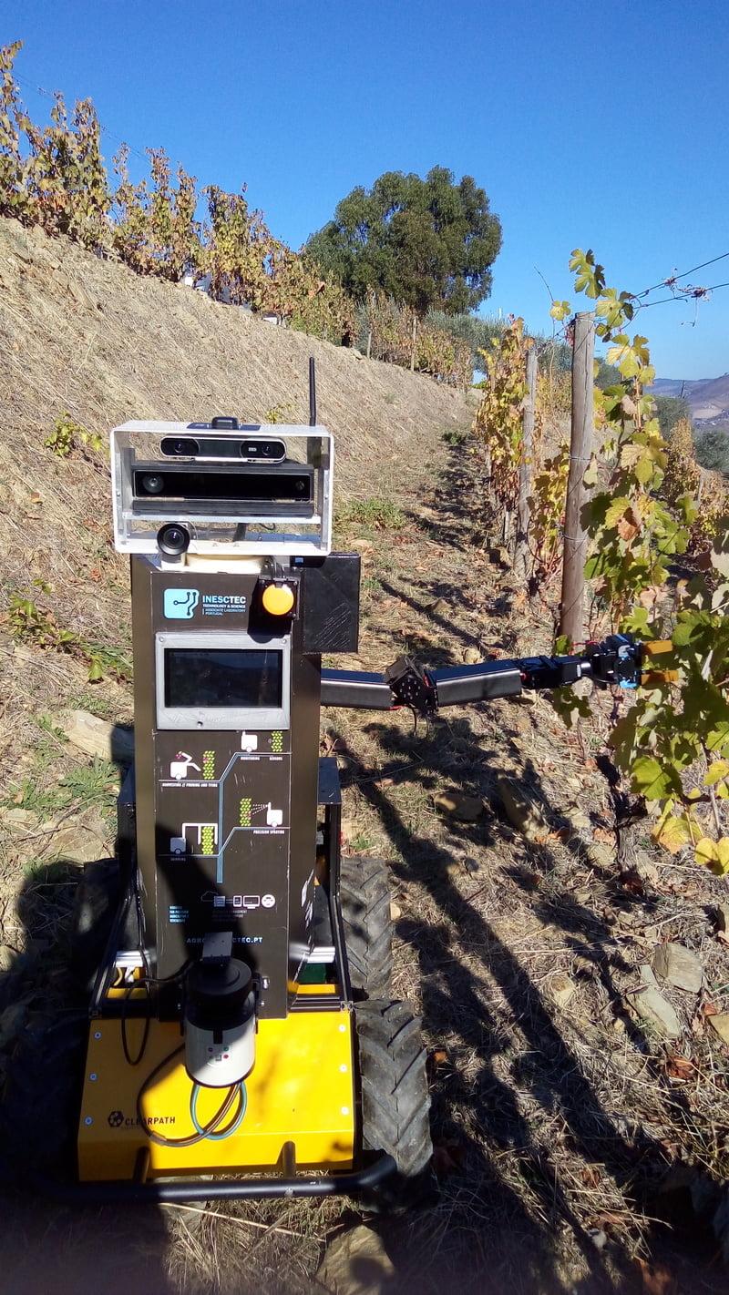 robo vinha