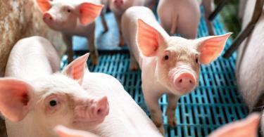 Conselho da União Europeia de Agricultura aborda rotulagem de bem-estar animal