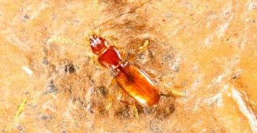 Cientistas propõem medidas para amenizar declínio da abundância de insetos