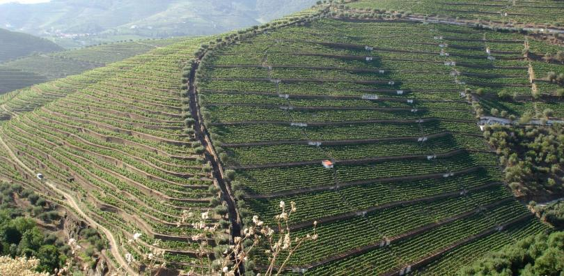 vida rural - vinha e vinho