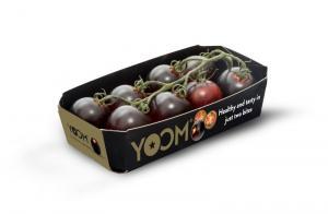tomate cereja purpura