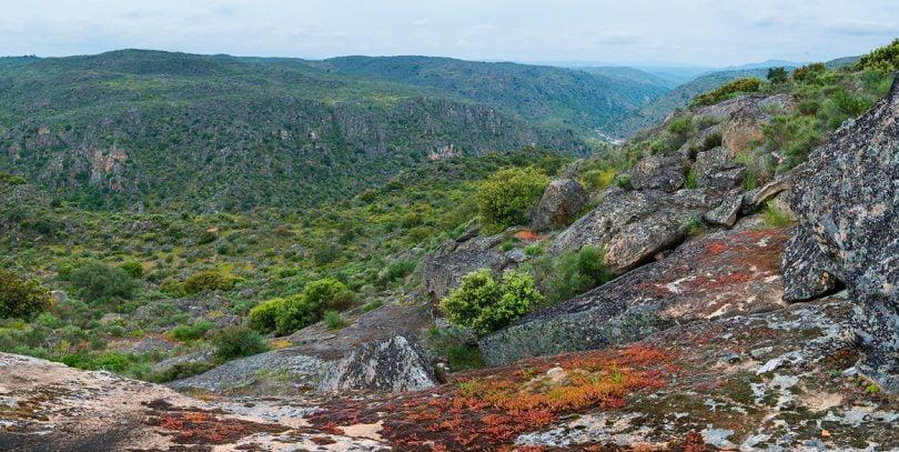 Symington anuncia parceria ambiental com a Rewilding Portugal