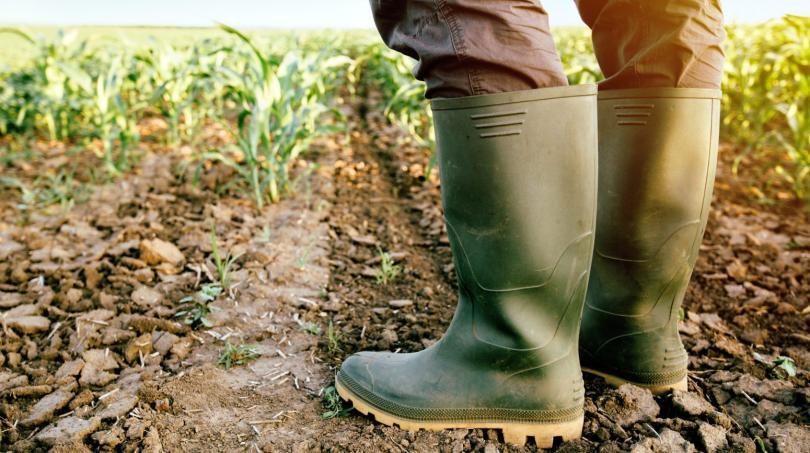 Ministério da Agricultura altera montante de apoio aos seguros de colheitas