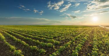 Portugal foi o país que menos cresceu na agricultura biológica