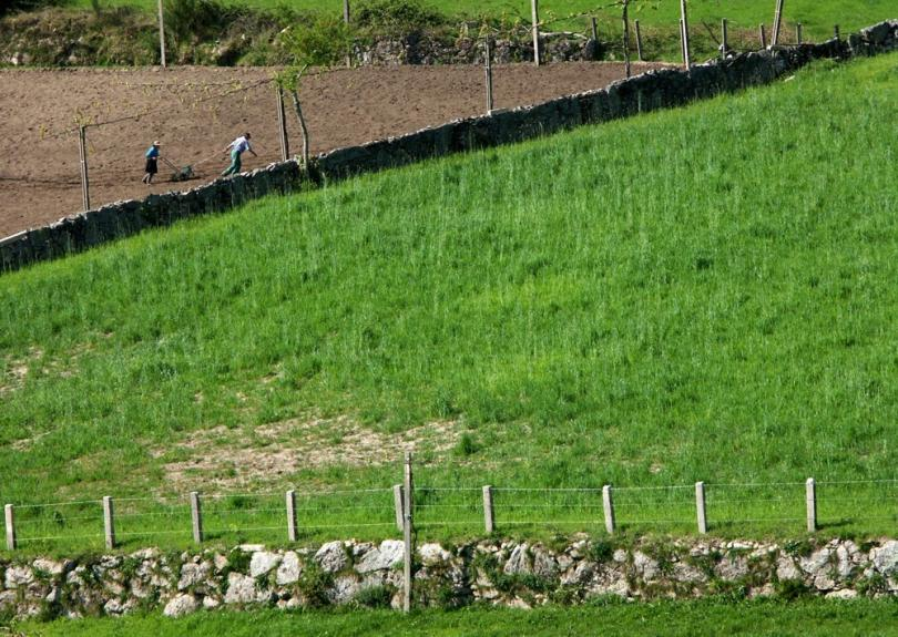 Abertas candidaturas a apoios para explorações agrícolas no Ribatejo Interior