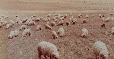 Interações entre o clima e a produção de ruminantes_FIGURA 2_VIDA RURAL
