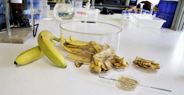 Cascas de banana limpam águas contaminadas com metais pesados