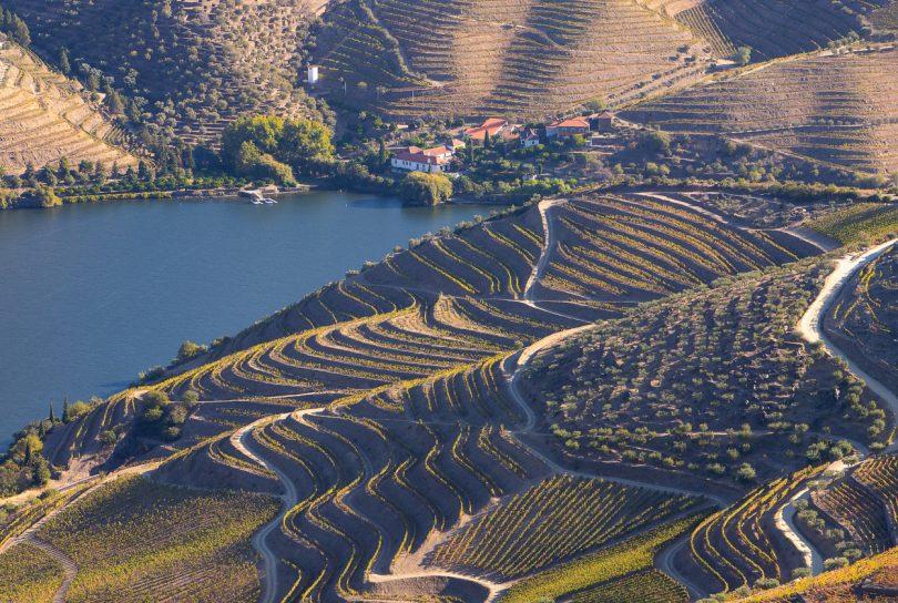 Douro investiu 300 mil euros na reconversão da vinha na última década