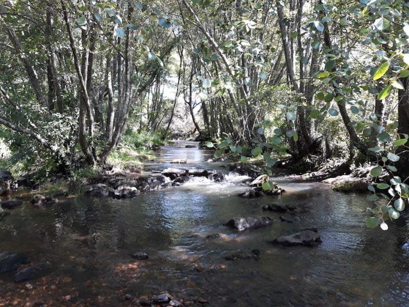 Florestas ripárias armazenam quantidades de carbono comparáveis às florestas de produção