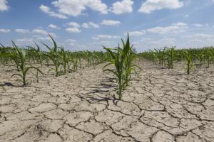 Solo degradado (Fonte: https://ec.europa.eu/jrc/en/news/soil-erosion-costs-european-farmers-125-billion-year)