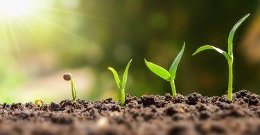 Ambientalistas contestam flexibilização do greening