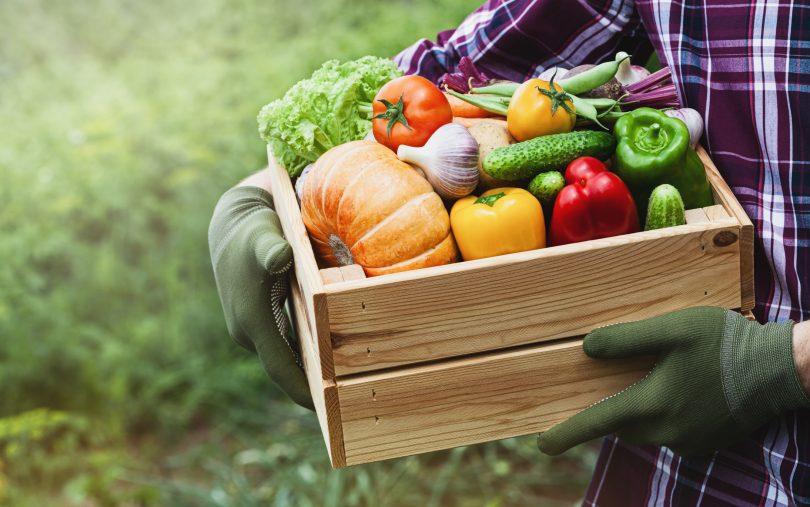 Ministério da Agricultura anuncia programa para apoiar escoamento de produtos locais