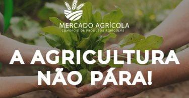 Plataforma Mercado Agrícola cria sinergias para ajudar escoamento de produtos