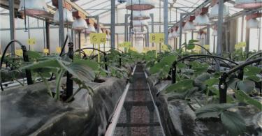 Uso de leds em horticultura