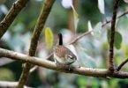 Controlar pragas de forma natural: Navigator coloca caixas-ninho para aves na Herdade da Espirra