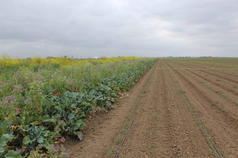 Sogepoc e Syngenta unidas para aumentar polinizadores nos campos agrícolas