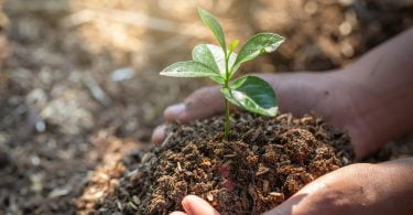 Estratégia de Biodiversidade da UE para 2030 pretende recuperar de forma sustentável