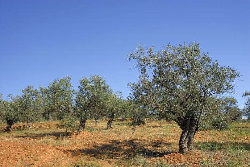 Universidade de Évora integra projeto europeu para agricultura sustentável