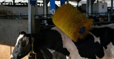 Leite fresco Pingo Doce é o primeiro a receber selo de bem-estar animal
