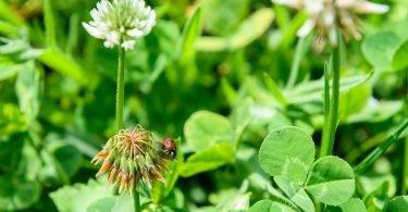 Operation Pollinator Lisboa Felisbela Campos  e