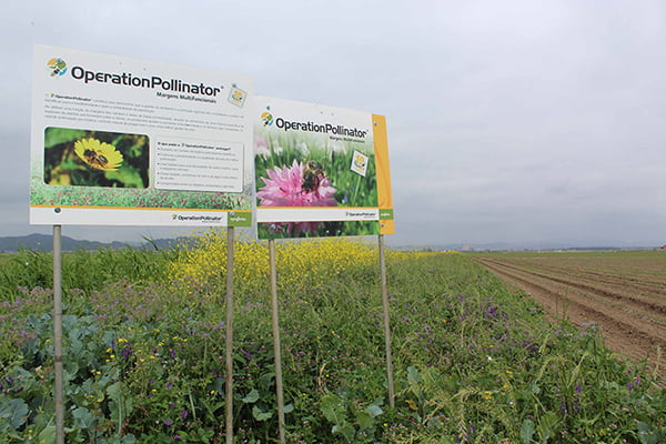 Syngenta Operation Pollinator Incrementar Biodiversidade scaled