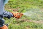 Politécnico de Coimbra experimenta substituição de herbicidas na agricultura biológica