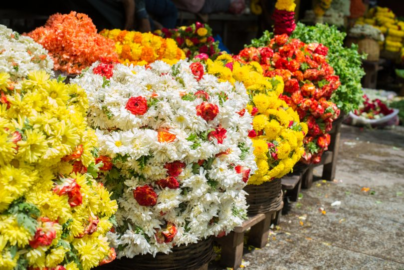Mercado de plantas vivas e flores com perdas de 4,12 mil milhões de euros em março e abril na UE