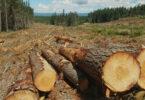 Exportações da indústria florestal cresceram em 2019