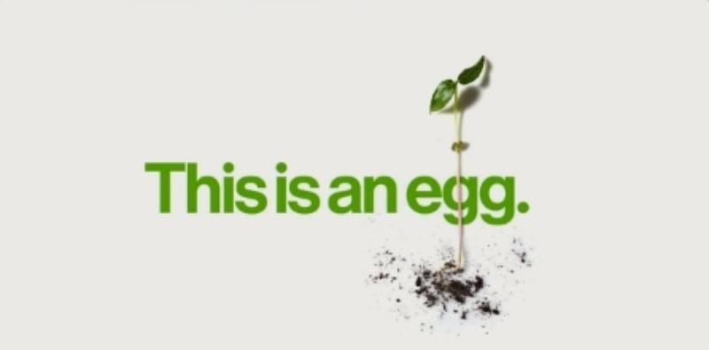 Isto é um ovo imagem de destaque