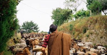 Banco de Terras pastores