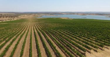 """A CVRA anunciou a adesão do Programa de Sustentabilidade dos Vinhos do Alentejo (PSVA) ao grupo internacional """"4 pour 1000""""."""