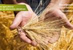 Sygenta apresenta novo programa de sustentabilidade agrícola