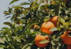 restos de laranja para gerar energia