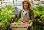 grupo dos agricultores - setor alimentar