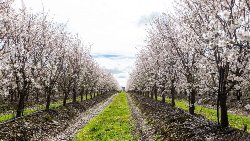 Veracruz apoia estudo sobre melhorias de práticas de produção no amendoal