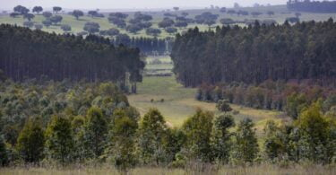 rePLANT junta empresas e universidades para a defesa da floresta