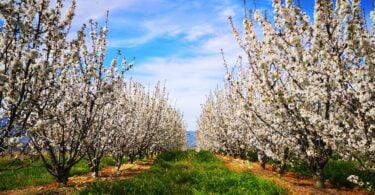 A RUDE, sob o conceito de frutiturismo ou turismo da fruta, criou experiências turísticas associadas às frutas produzidas na Cova da Beira.
