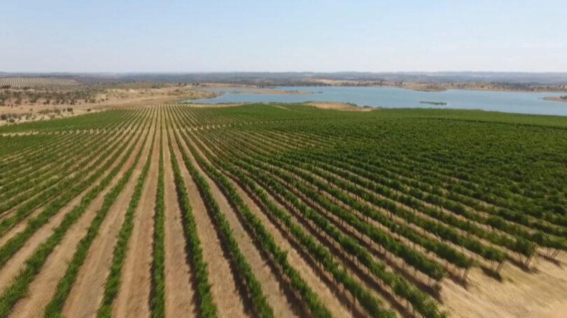 As exportações dos vinhos portugueses aumentarem 19,3% em valor no primeiro semestre de 2021 em relação ao período homólogo.