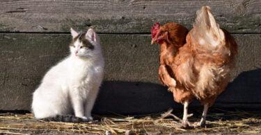 Portugal possui mais de 4 mil milhões de animais declarados