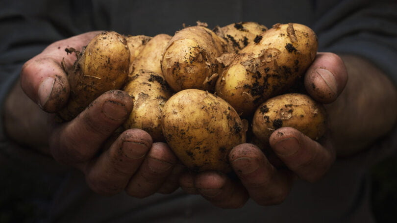 Tesco experimenta venda de batatas não lavadas para diminuir desperdício alimentar
