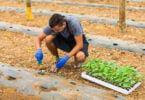 AJAP vai lançar plataforma para promover competitividade dos jovens agricultores