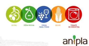 O Green Deal europeu pode levar a perdas de 300 milhões de euros por ano no Rendimento Agrícola em Portugal, revela um estudo da ANIPLA.