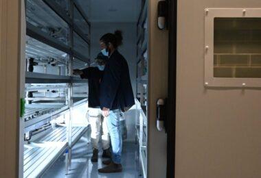 A startup Bios vai utilizar o desperdício energético do campus da Nova SBE para produzir vegetais, através de tecnologia integrada.