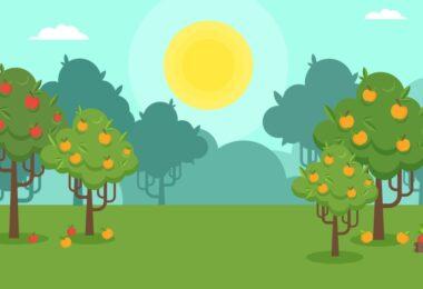 Os livros de texto de fruticultura tendem a dar importância à correção do solo e à adubação efetuadas à instalação do pomar.