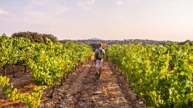 Os vinhos portugueses foram mais exportados em janeiro e fevereiro deste ano, em comparação ao mesmo período de 2020.