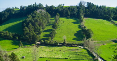O IFAP procedeu a pagamentos ao setor agroflorestal no montante total de cerca de 37,5 milhões de euros, durante o passado mês de março.