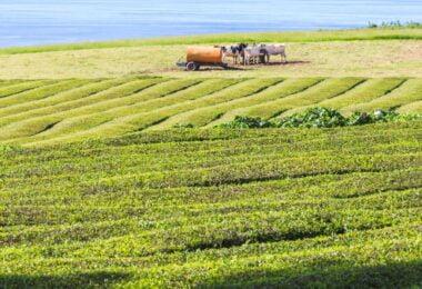 """Várias organizações ligadas à alimentação e ao mundo rural assinaram um manifesto """"Por uma alimentação consciente em Portugal""""."""