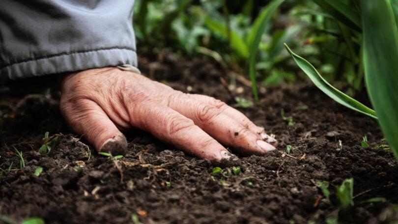 Estudo: Sequestro de carbono feito por solos pode estar sobrestimado