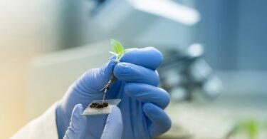 Várias associações apelam ao apoio a ações políticas imediatas baseadas no estudo da Comissão Europeia sobre edição genética.