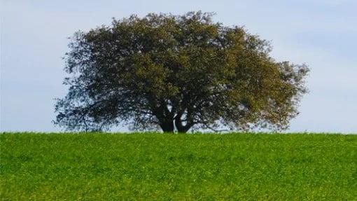 """Os agricultores doCampo Branco, em Beja, estão à procura de novos """"nichos"""" de mercado para valorizarem as suas produções."""